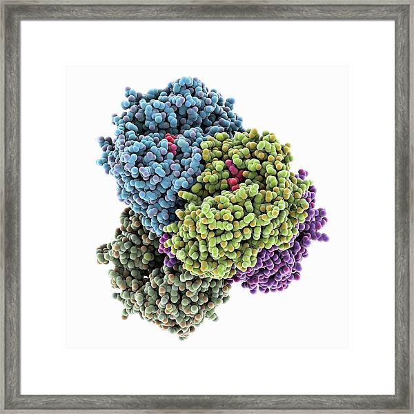 Retinal Dehydrogenase Molecule Framed Print
