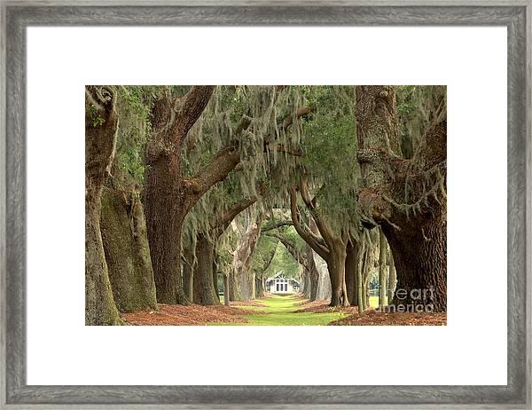 Retreat Avenue Of The Oaks Framed Print