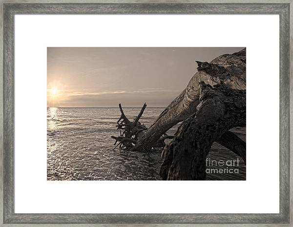 Framed Print featuring the photograph Returning To The Sea by Glenda Wright