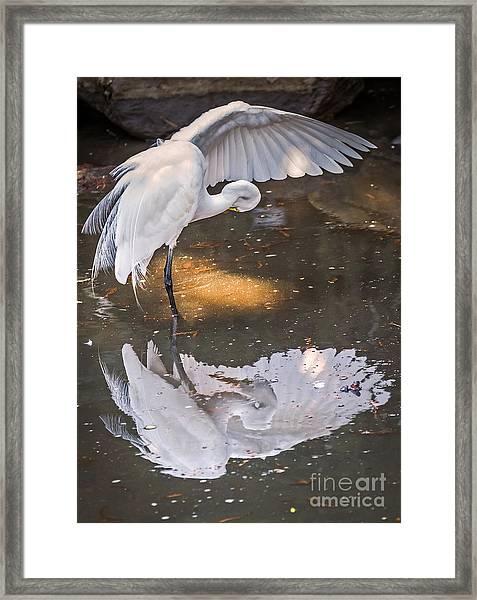 Revealed Close-up Framed Print