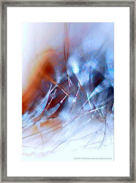 Rhapsody Of Art Framed Print by JCYoung MacroXscape
