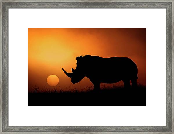 Rhino Sunrise Framed Print by Mario Moreno