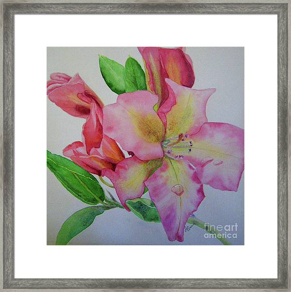 Rhodie With Dew I Framed Print