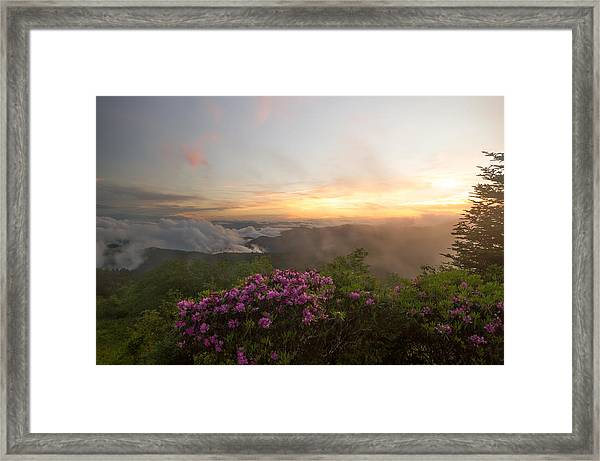 Rhododendron Sunset Framed Print
