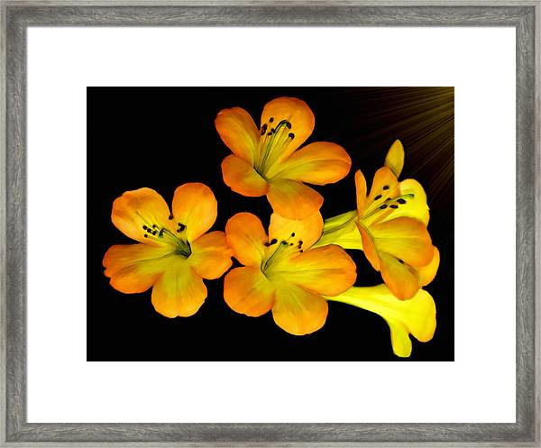 Rhododendrons Framed Print