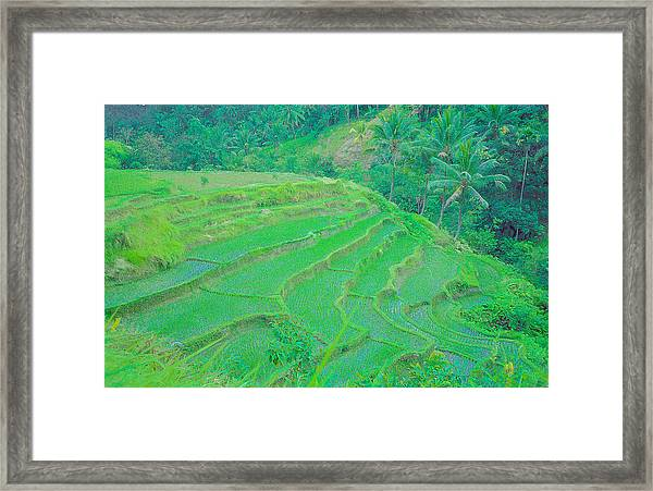 Rice Fields In Indonesia Framed Print