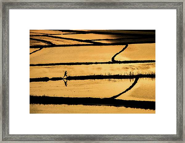 Rice Framed Print by ?mm? Nisan