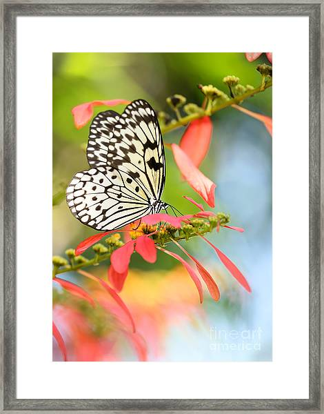Rice Paper Butterfly In The Garden Framed Print