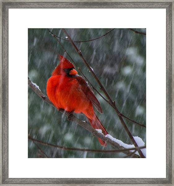 Riding Out The Storm  Framed Print
