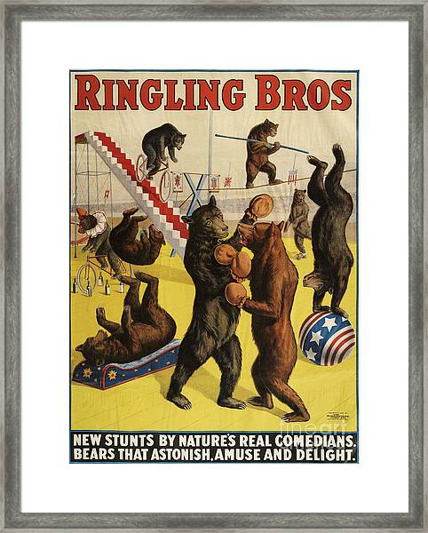 Ringling Bros 1900s Bears Performing Framed Print