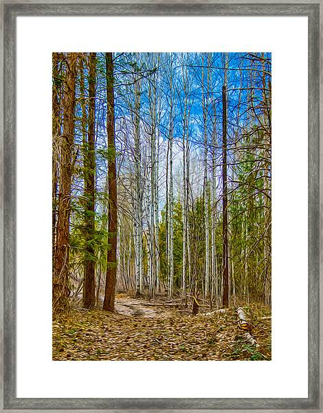 River Run Trail At Arrowleaf Framed Print