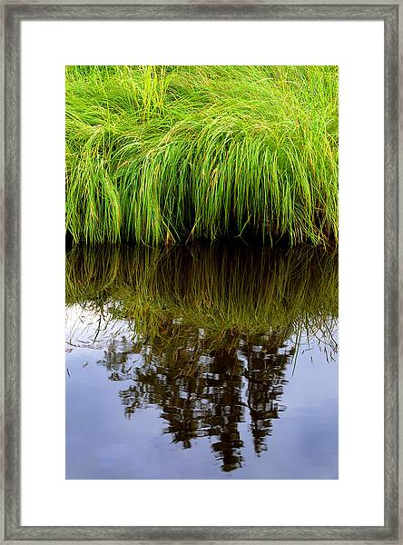 Riverbank Wild Grass Framed Print