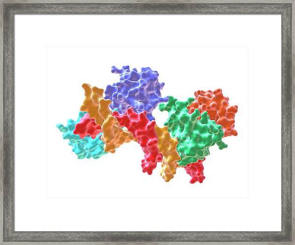Rna Polymerase Alpha C-terminal Domain Framed Print