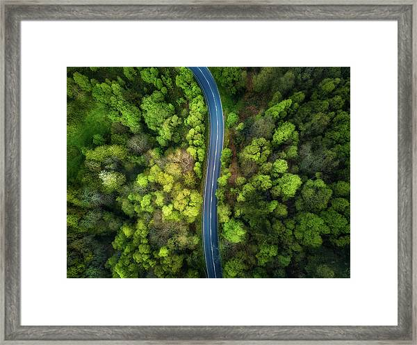 Road In The Forest Framed Print