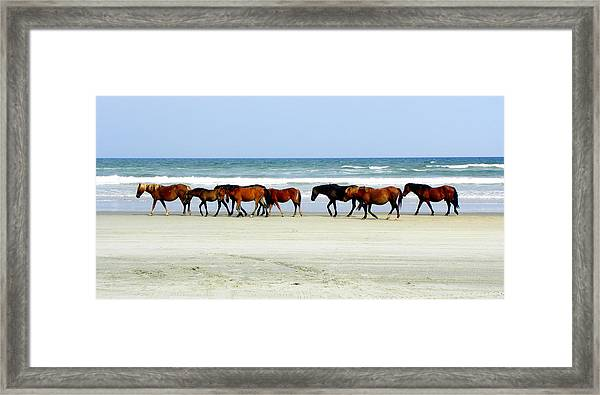 Roaming Wild And Free Framed Print by Kim Galluzzo Wozniak