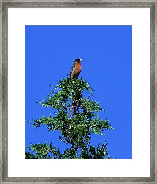 Robin Christmas Tree Topper Framed Print