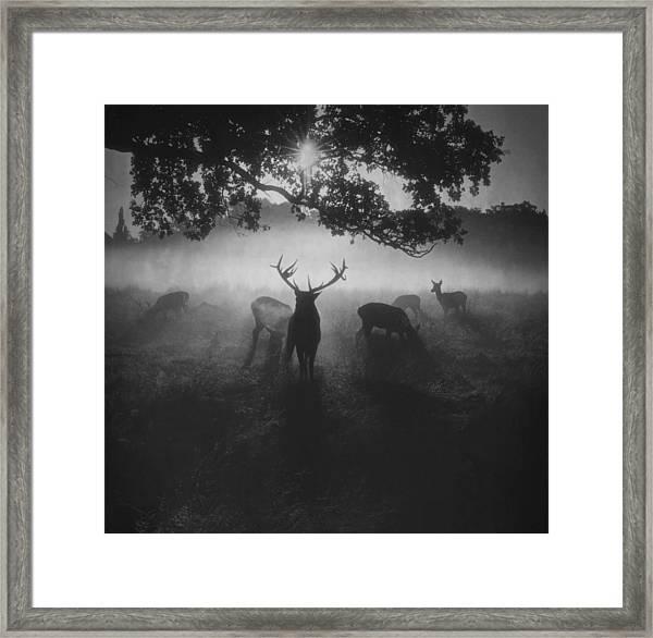 Robin Hood Woods Framed Print by Robert Fabrowski