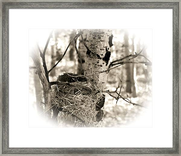 Framed Print featuring the photograph Robins Nest In The Aspens by William Havle