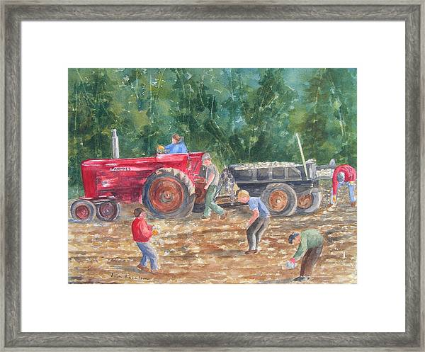 Rock Picking Framed Print