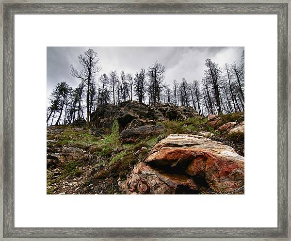 Rocks And Trees 2 Framed Print