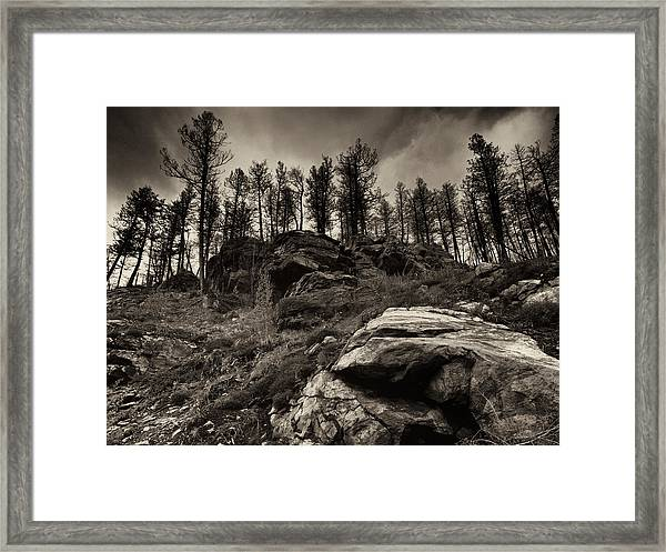 Rocks And Trees And Trees And Rocks Framed Print