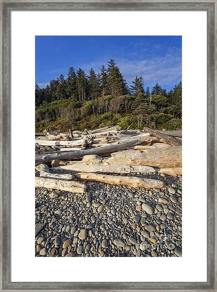 Rocky Beach And Driftwood Framed Print