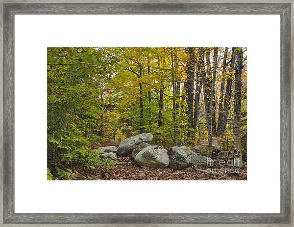Rocky Forest Path Framed Print