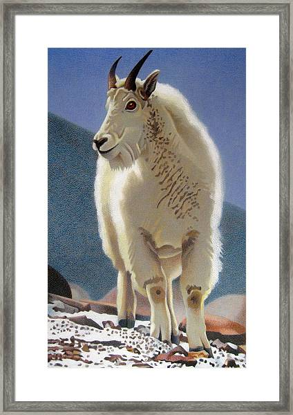 Rocky Mountain Goat Framed Print