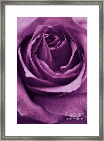 Romance IIi Framed Print