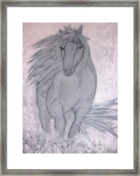 Romeo The White Stallion Framed Print