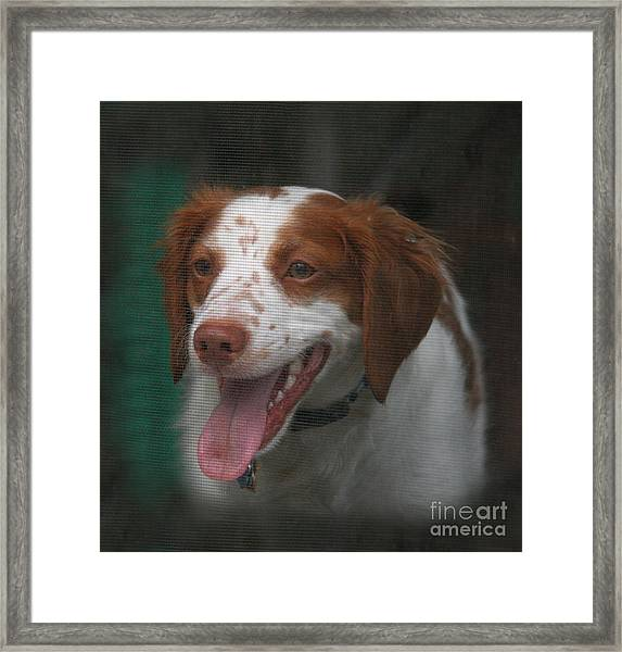 Rooney At The Back Door Framed Print
