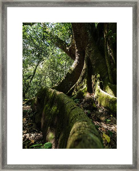 Root Framed Print