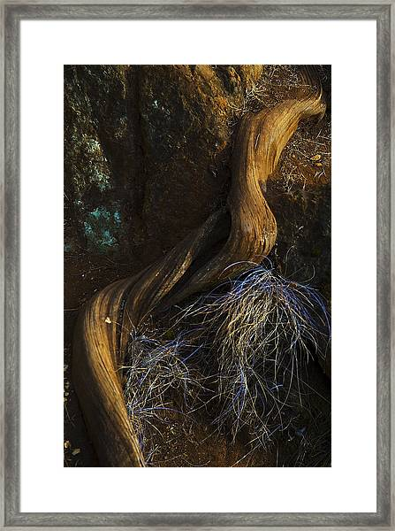 Tree Root Framed Print