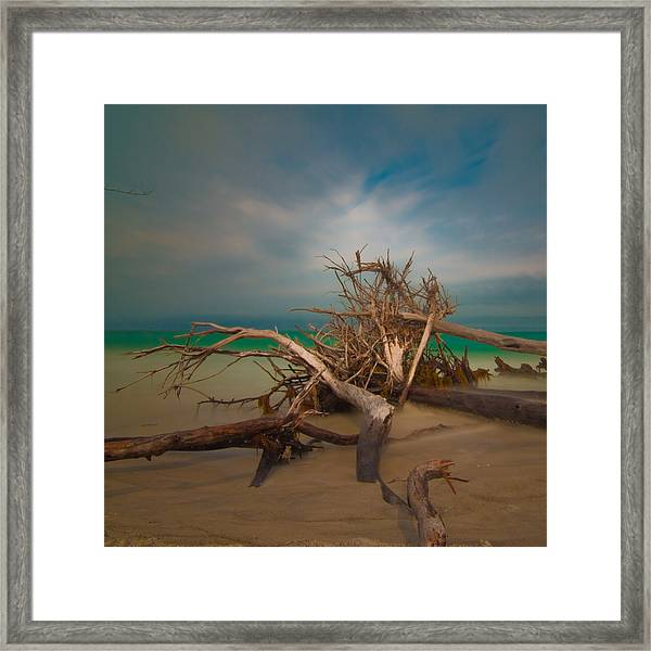 Roots 4 Framed Print