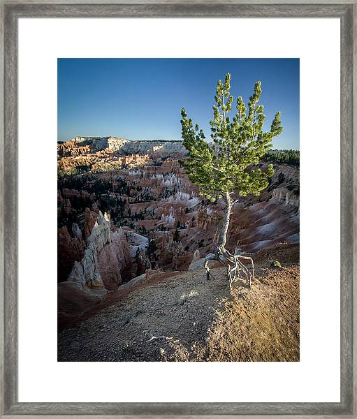 Roots On The Rim 2 Framed Print