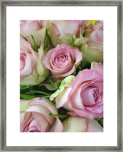 Rose Bed Framed Print