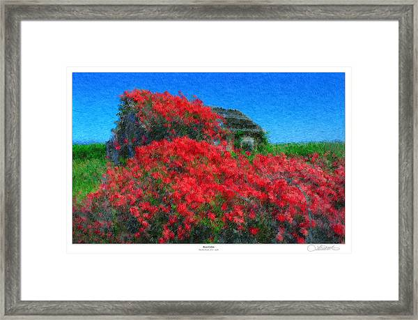 Rose Cabin Framed Print by Lar Matre