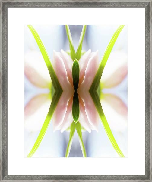 Rose Colored  Tulip Framed Print