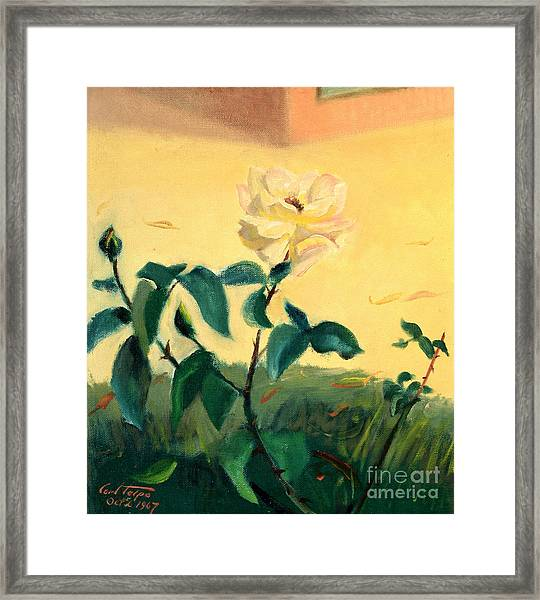 Rose Creme De La Creme Framed Print