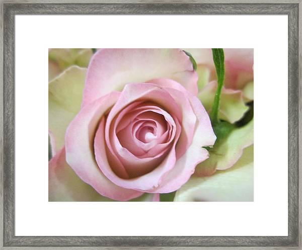 Rose Dream Framed Print