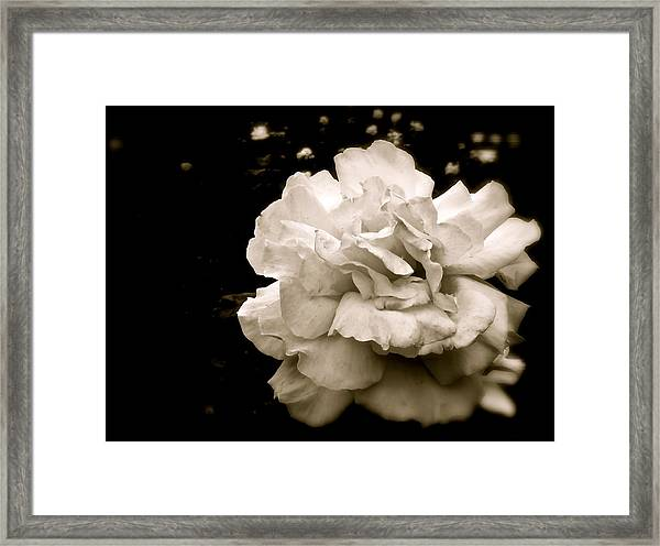 Rose I Framed Print