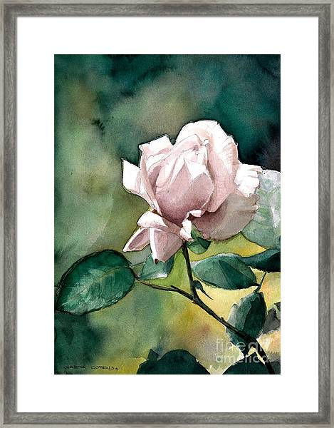 Watercolor Of A Lilac Rose  Framed Print
