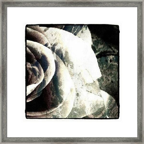 Rose In Retro Framed Print