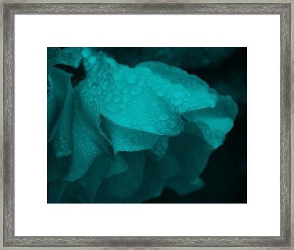 Rose In Turquoise Framed Print