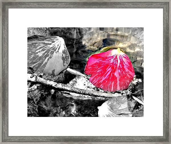 Rose Petal Creek Framed Print