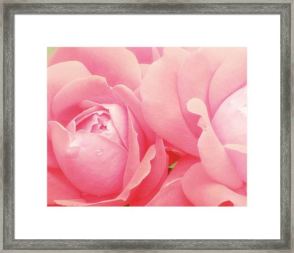 Rose Photography Pink Roses Pink Flower Photography Baby Girl Nursery Art Soft Girly Pink Wall Art Framed Print