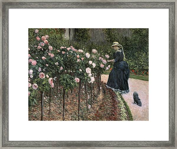 Roses In The Garden At Petit Gennevilliers Framed Print
