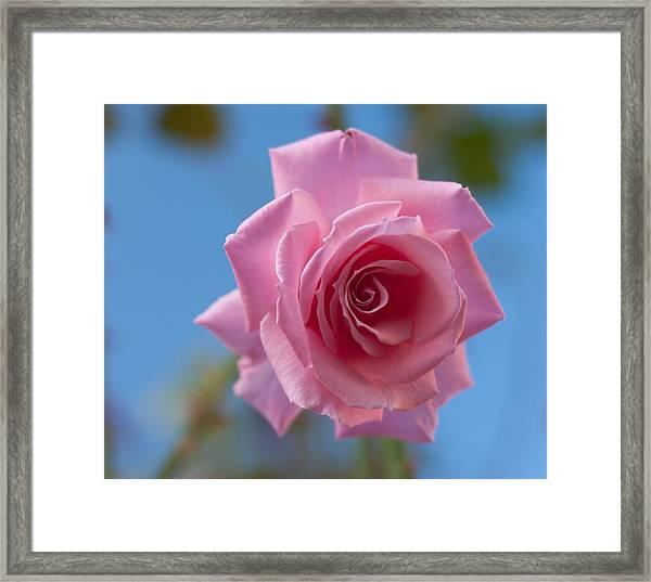 Roses In The Sky Framed Print