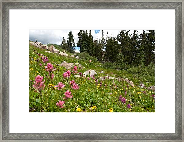 Rosy Paintbrush And Trees Framed Print