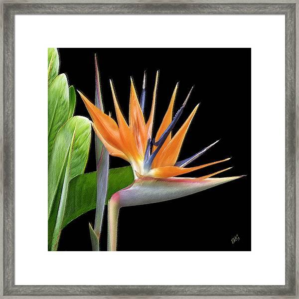 Royal Beauty I - Bird Of Paradise Framed Print